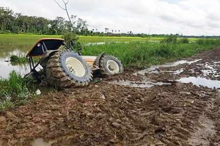 Reportan pérdidas de cultivos soya y arroz tras intensa lluvia en Santa Cruz
