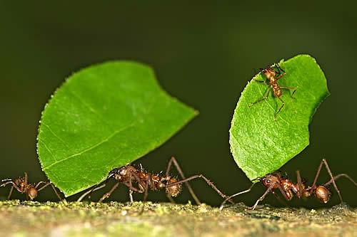 Vertederos de hormigas en América Latina emiten una gran cantidad de gas de efecto invernadero