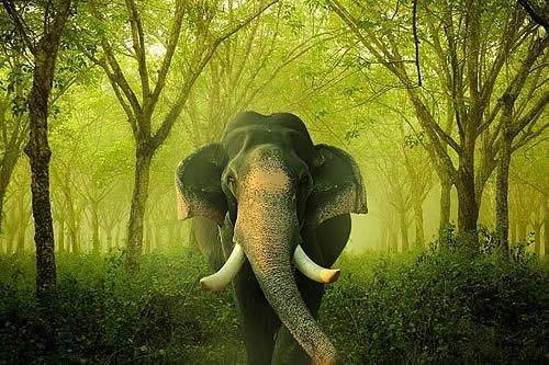 Un elefante salvaje enfurecido ataca una zona residencial