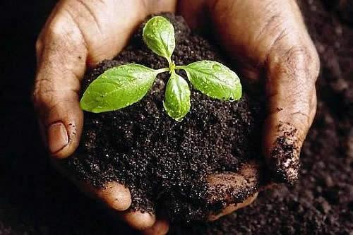 Bolivia aboga por acciones concretas para evitar la contaminación y degradación del suelo