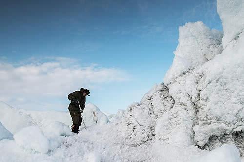"""""""Un hallazgo único"""": Encuentran huellas de bosques de plataneros y magnolios en el Ártico"""