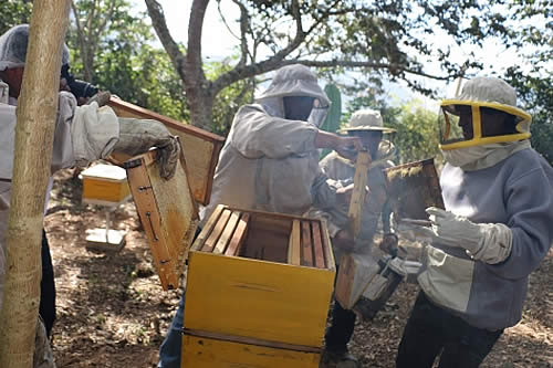 Tercera Feria de la Miel en Coroico alista concursos y participación de un domador de abejas