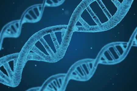 """Un nuevo método describe nuevos genes en la """"materia oscura"""" del ADN"""