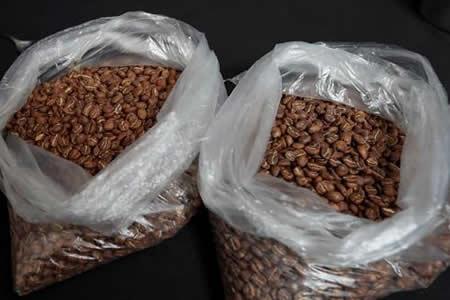 El café boliviano rompe récords con aroma de vanguardia gastronómica