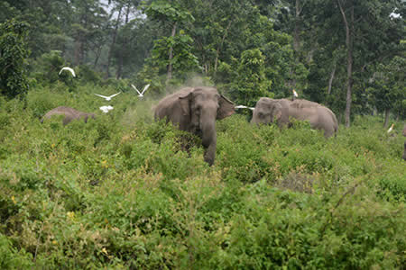 Escalofriante imagen de dos elefantes en llamas gana un prestigioso concurso