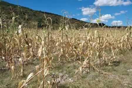 Sequía deja pérdidas por 150 millones de dólares a productores