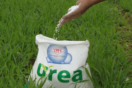 YPFB inicia comercialización de urea en Santa Cruz a Bs 146 el saco de 50 kilos
