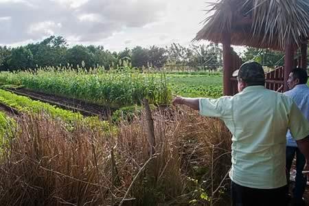 EEUU y Cuba acuerdan cooperar en sanidad animal y vegetal y control de plagas