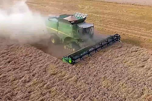 Anapo: Producción de granos se estancó desde 2014