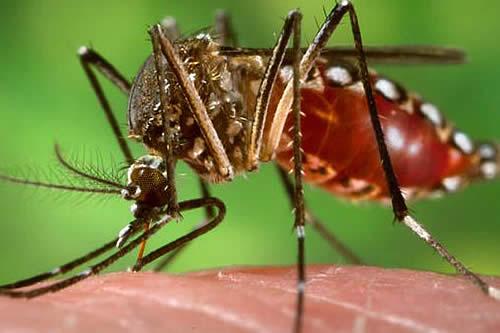 Controlan epidemia de dengue en Riberalta