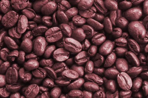 Gobierno aprueba decreto para fortalecer la producción de café orgánico