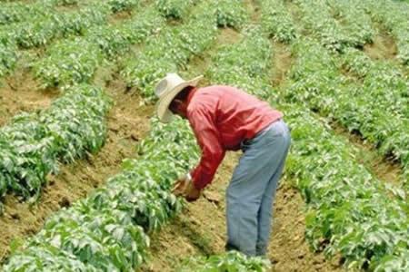 TCP declara constitucional la ley que sube los cultivos de coca a 22.000 Ha
