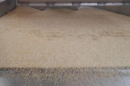 Bolivia prevé exportar hasta fin de año 30.000 toneladas de quinua a EEUU y Europa