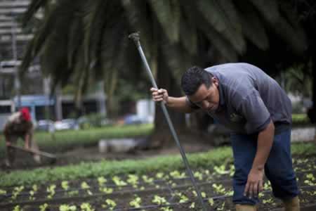 Mi Conuco 86: un oasis de hortalizas en el corazón de Caracas