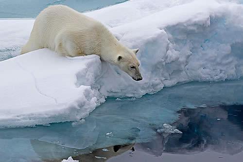 Algo raro ocurre con el Polo Norte, y nadie sabe por qué