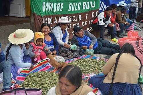 Cochabamba celebra el 'Día del acullico' con multitudinaria promoción del masticado de coca
