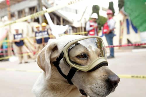 Frida Superstar: La perra rescatista por la que se pelean la Marina mexicana y una cervecería