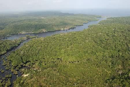 El área intacta del paisaje forestal mundial bajó en más de un 7 % en 13 años