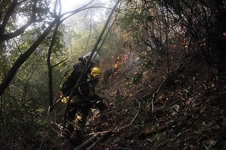 Indagan en Chile negligencia de empresa eléctrica en origen de voraz incendio