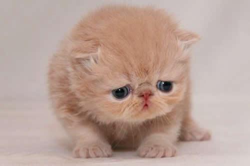 ¿Adiós a Grumpy Cat?: Así es el nuevo gato tristón que causa furor en las redes