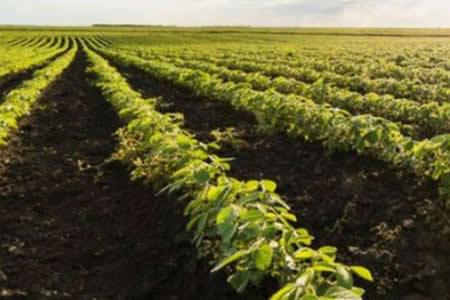 Bolivia supera la peor sequía de su historia y aumenta un 103 % sus cultivos