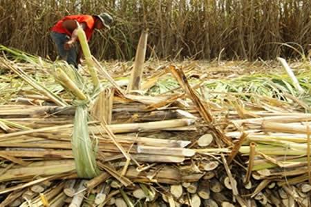 Alistan plan para aprovechar residuos de caña en Bermejo