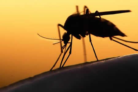 Dos tipos de vacuna ofrecen protección de larga duración contra el zika