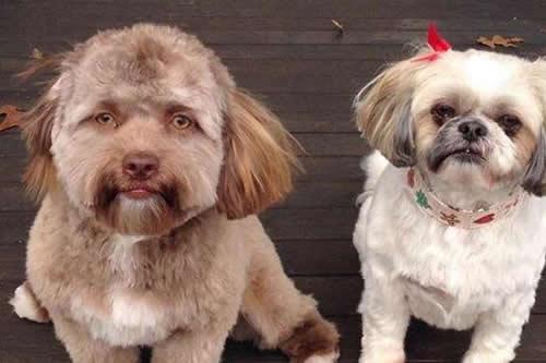 Ahora podemos ver el video del perro con rostro humano y es increíble
