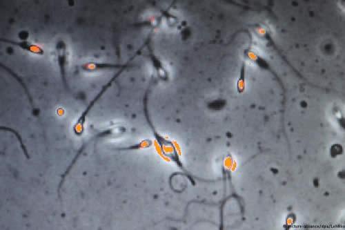 La NASA envía esperma a la conquista del espacio
