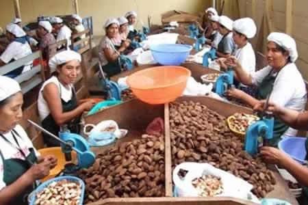 Resultado de imagen para ALMENDRA BOLIVIANA  MERCADOS