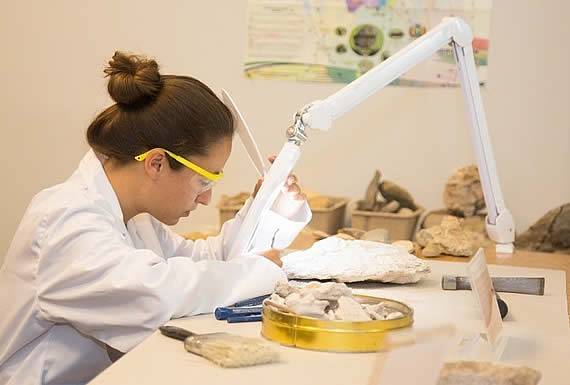 Hallan en Rusia restos de anfibios que vivieron hace más de 200 millones de años