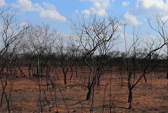 Técnicos, pueblos indígenas y voluntarios inician recolección de semillas nativas para reforestar la Chiquitania