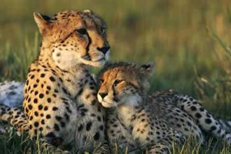 La vida salvaje se redujo en un 58 % en los últimos 40 años