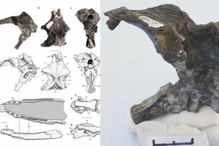 Hallan en Argentina restos de un desconocido reptil volador del Jurásico