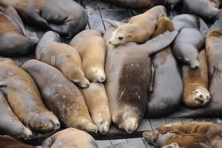 Las capturas de leones y osos marinos ha alterado el ecosistema del Atlántico