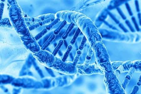 Científicos en EEUU hallan por casualidad que gen de memoria actúa como virus