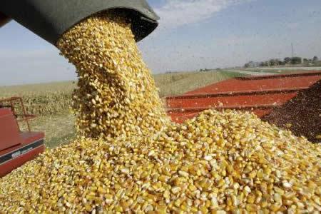 IBCE: Bolivia se convirtió en última década en exportador neto de cereales con ingresos por $us 1.028 millones