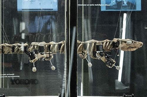 Esqueleto de reptil gigante de 300 millones de años 'resucita' como robot
