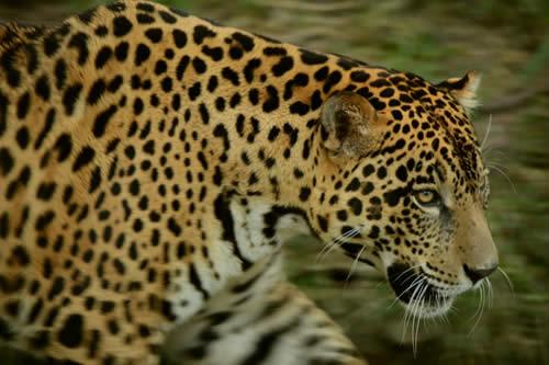 El tráfico ilegal hacia Asia amenaza a especies de Latinoamérica