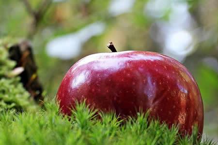 La fruta prohibida del Edén no era la manzana: lo tradujeron mal