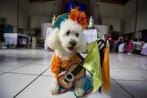 """Cientos de perros """"peregrinan"""" en Nicaragua en busca de su santo patrono"""