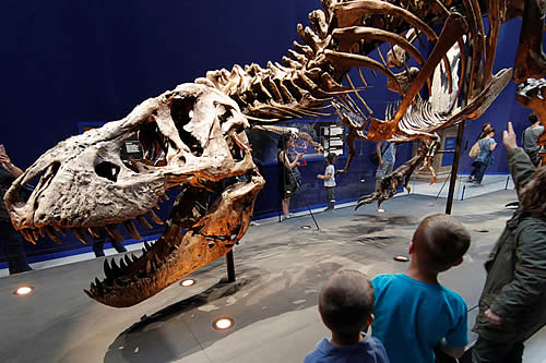 La subasta en eBay del rarísimo fósil de un bebé de 'T. rex' por 3 millones de dólares indigna a los científicos