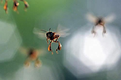 Las abejas que vivían en la catedral de Notre Dame sobreviven al incendio