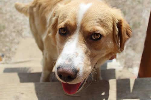 """""""Se busca un abogado"""": 'Arrestan' a un perro y su expresión se vuelve viral"""