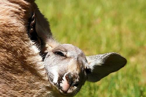 """Zoólogo asegura haber descubierto un nuevo """"tipo de marsupial"""""""