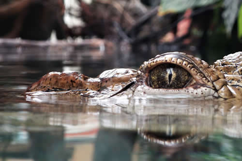 Hallan el cadáver de un 'monstruo del lago Ness' en EE.UU.