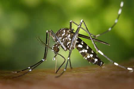 Parlamento del Mercosur aprueba protocolo de salud contra el Zika