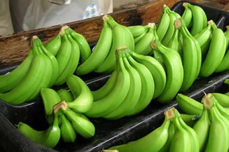 Gobierno construirá cuatro empacadoras de banano para potenciar la exportación