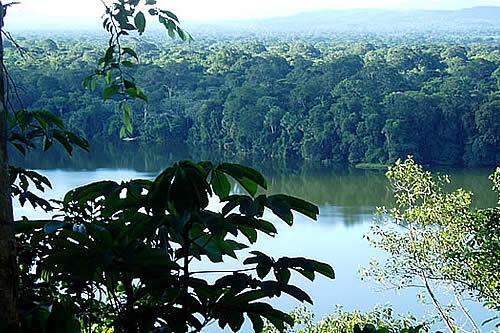 ONU y Unión Europea constatan que Parque Madidi está protegido y libre de coca