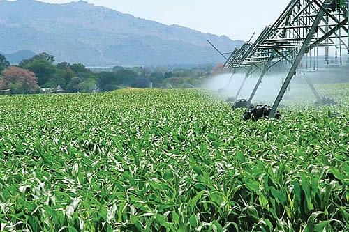 Ingenios prevén millonarias inversiones para activar la industria de los biocombustibles